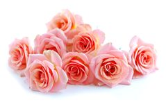 Roses roses sur le blanc Photographie stock libre de droits