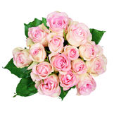 Roses roses sur le fond blanc Photo libre de droits