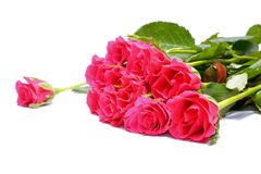 Roses roses sur le fond blanc Photos libres de droits