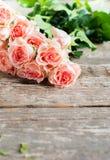 Roses roses tendres dans la lumière de soleil, image modifiée la tonalité, Images libres de droits