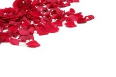 Roses rouges Photo stock