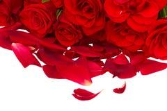 Roses rouges avec des pétales Images stock