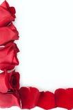 Roses rouges avec des pétales comme contour de cadre Photographie stock libre de droits