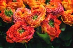 Roses rouges avec le milieu vert de la sélection originale d'un grand bouquet en vente sur le marché de fleur Image libre de droits