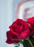 Roses rouges avec le plateau image libre de droits