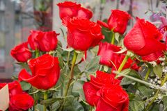 Roses rouges C'est beaucoup de roses rouges Photo libre de droits
