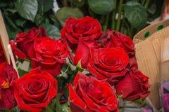 Roses rouges C'est beaucoup de roses rouges Images stock