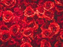 Roses rouges comme fond Images libres de droits