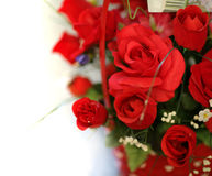 Roses rouges d'isolement Images stock