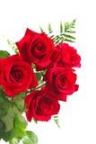 Roses rouges sur le fond blanc Image stock