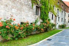 Roses rouges de fleurs sur la vieille rue Image stock