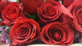 Roses rouges de velours Photos libres de droits