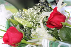 Roses rouges et Photos stock