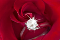 Roses rouges et anneaux de mariage Photos stock