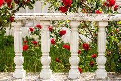 Roses rouges et barrière blanche Photo libre de droits