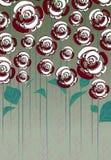 Roses rouges et blanches Photos libres de droits