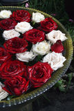 Roses rouges et blanches Photographie stock