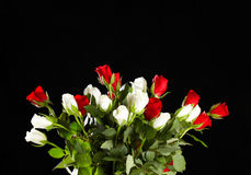 Roses rouges et blanches Photo libre de droits