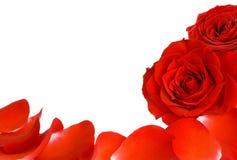 Roses rouges et cadre de pétales Photo libre de droits