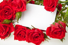 Roses rouges et carte vierge d'invitation Photo stock