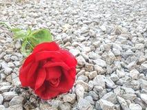 Roses rouges et terre pierreuse Photographie stock