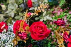 Roses rouges fleurissant dans le jardin pour le fond ou la texture, jour du ` s de Valentine images libres de droits