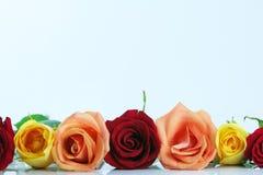Roses rouges, jaunes et de pêche de couleur Photographie stock
