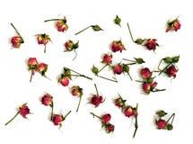 Roses rouges lumineuses sur un fond blanc images stock