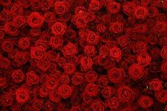 Roses rouges naturelles fond, mur de fleurs Image stock