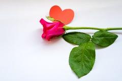 Roses rouges pour le jour du ` s de Valentine d'isolement sur le fond blanc Fond de blanc de carte de Valentine Images libres de droits