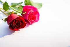 Roses rouges pour le jour du ` s de Valentine d'isolement sur le fond blanc Fond de blanc de carte de Valentine Photographie stock