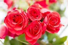 Roses rouges sur l'usine Images stock