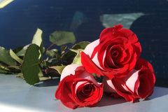 Roses rouges sur le tronc de voiture pour le fond, foyer sélectif Photos stock