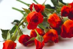 Roses rouges sur un fond blanc Images stock