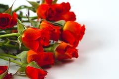 Roses rouges sur un fond blanc Photo libre de droits