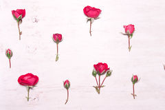 Roses rouges sur un fond blanc Photos libres de droits