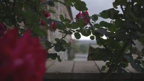 Roses rouges un jour nuageux en Toscane banque de vidéos