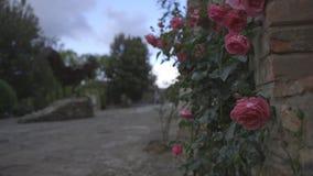 Roses rouges un jour nuageux en Toscane 2 clips vidéos
