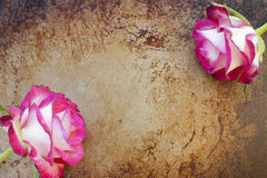 Roses and rust. Beautiful roses on a rusty, grunge background stock image