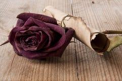 Roses sèches et un vieux roulis Image stock
