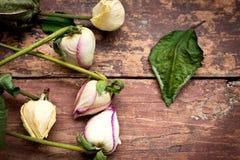 Roses sèches sur la table en bois Photos libres de droits