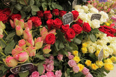 Roses for sale royalty free stock images