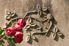 Roses and Sandstone Royalty Free Stock Photo