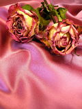 Roses on satin Stock Image