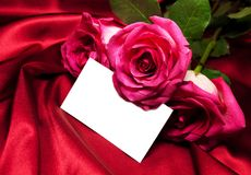 Roses on satin background Royalty Free Stock Photo
