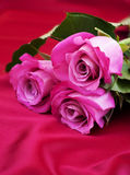 Roses on satin background Royalty Free Stock Photography