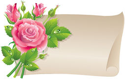 Roses scroll. Illustration contains transparent object. EPS 10 Royalty Free Stock Image