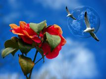 Roses and seagulls against a blue sky. A digital compilation off some off my pictures, combined into a new composition, representing some flying seagulls in Stock Photo