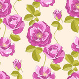 Roses seamless background Stock Images