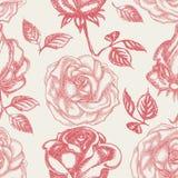 Roses seamless background Stock Image